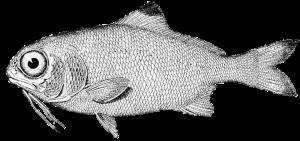 fish-976080_960_720